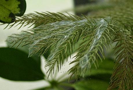 Spider Mites Get A Free Tree Pest Management Estimate Fort