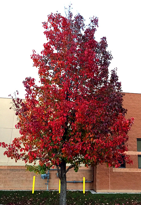 Plant And Tree Selection Request Tree Services Now