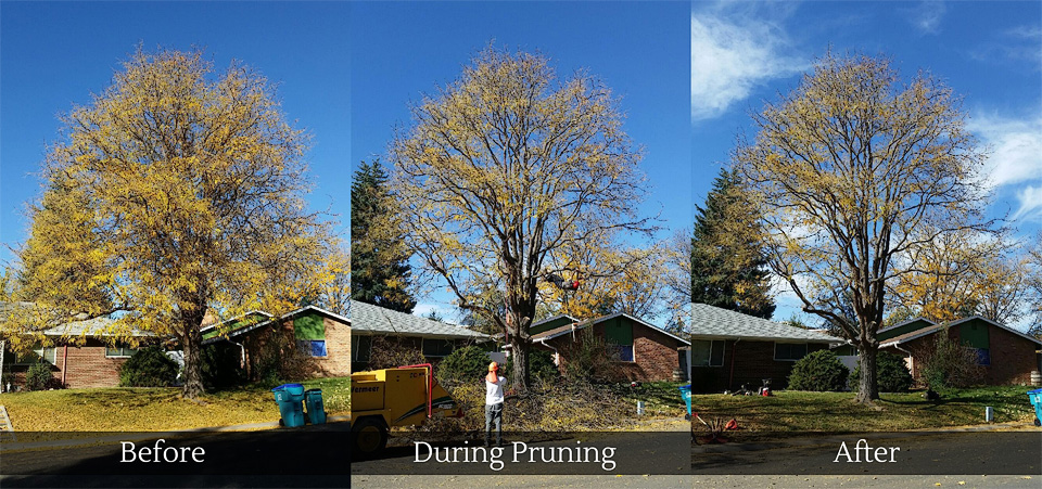 Fort Collins Tree Trimming Request An Estimate Fort